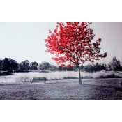Árbol Rojo